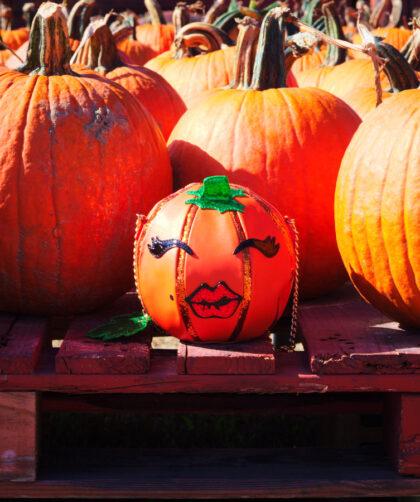 Pumpkin Picking- The Poppy Skull