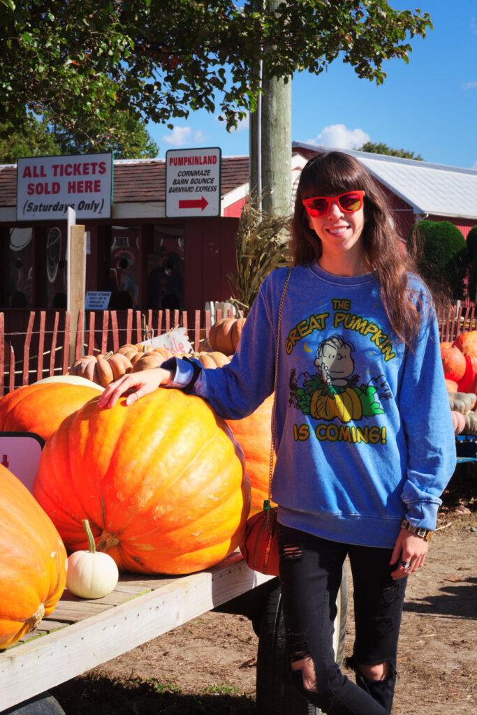 Duffield's Pumpkin Picking