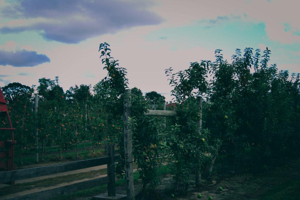 Johnson's Farm Apple Orchards