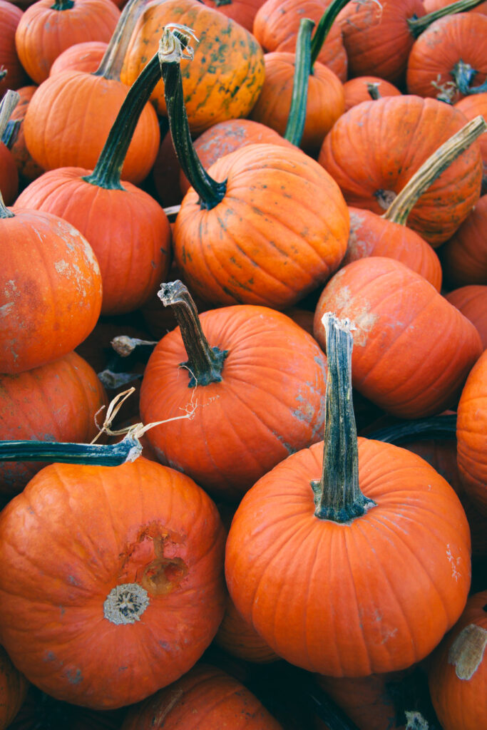 Pumpkin Land PA