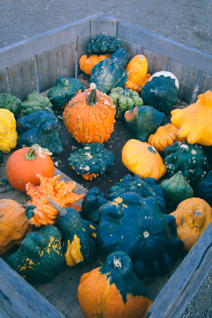 Linvilla Orchards Gourds