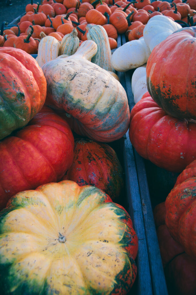 Fall fun pumpkins