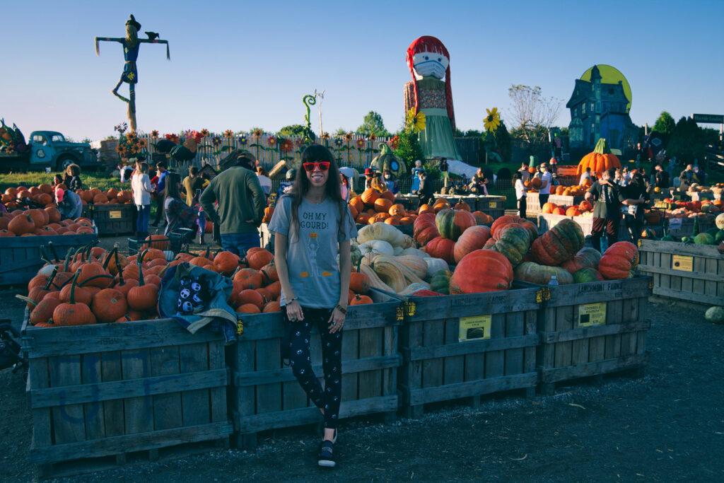 pumpkin land linvilla orchards