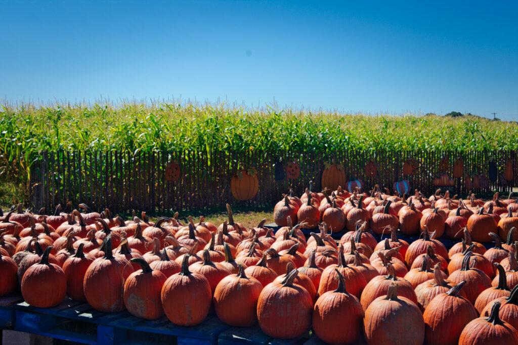 Pumpkin Land Sewell NJ