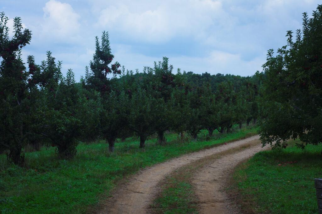 Apple Picking Barnard's Orchard